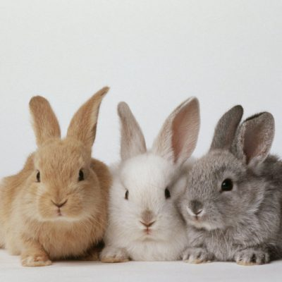 There Is A Pop-up Bunny Cafe Coming to Orlando