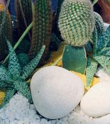 Cacti + Succulents Centerpiece