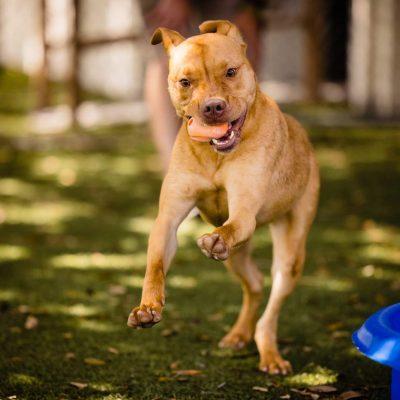 This Orlando Shelter Dog Needs A Home