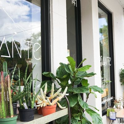 Piante: Not Your Average Garden Variety Shop in Winter Park