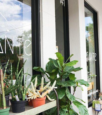 Piante: Not Your Average Garden Variety Shop in Winter Park