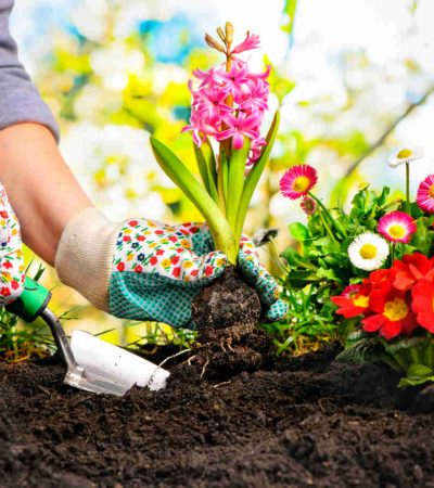 How to Guide: Gardening in Winter Park