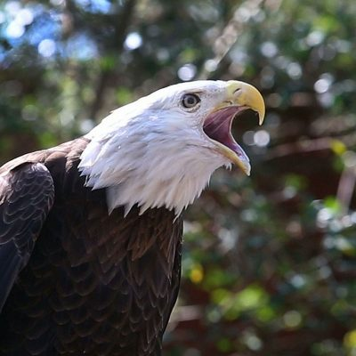 Bird-Brained: Audubon Center for Birds of Prey