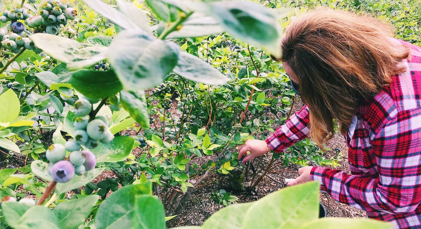 Southern hill farms: Fruit picking festival