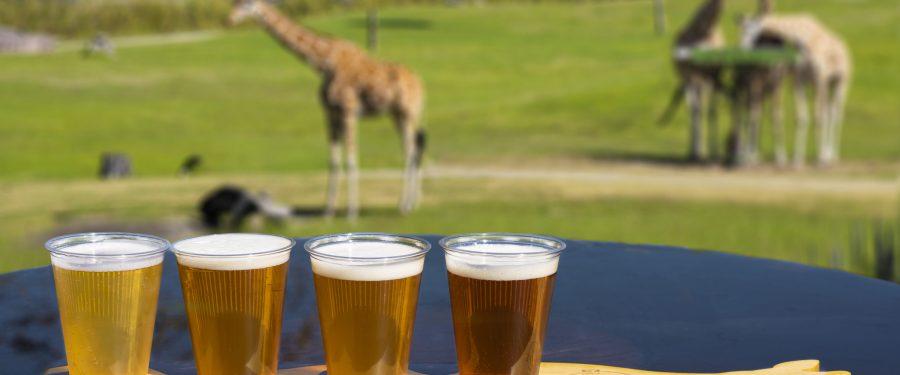 Bush Gardens Giraffe Bar is opening!
