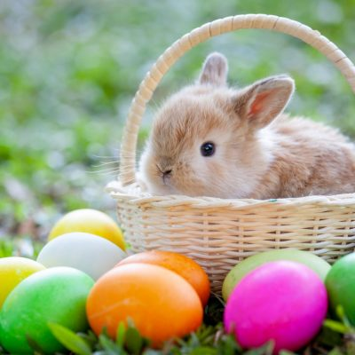 What to do in Orlando This Easter Weekend