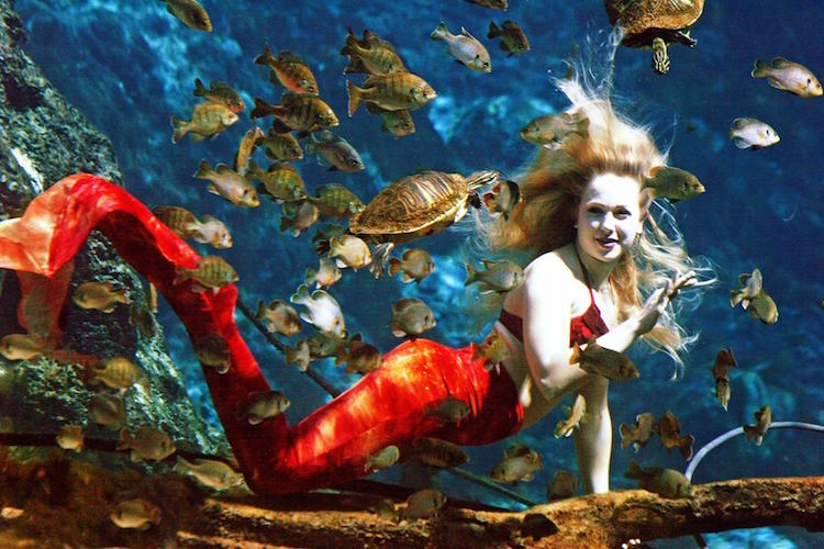 Weeki Wachee Mermaid Auditions 2021