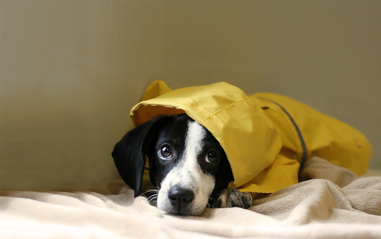 How to keep your pets safe during hurricane season